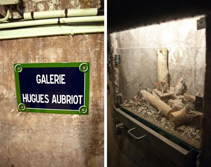 Paris sewer tour