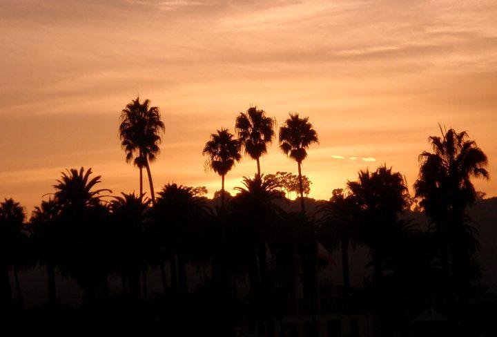 Palm trees at sunset in Santa Barbara, California, USA