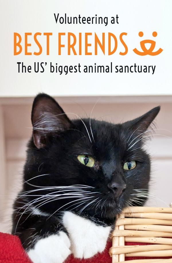 Making new Best Friends at the US' biggest animal sanctuary, Kanab Utah – On the Luce travel blog