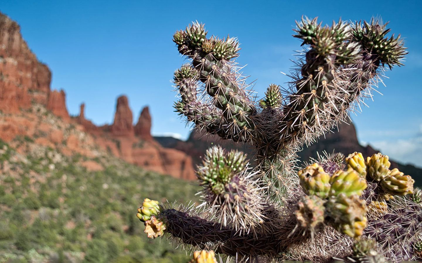 Cactus in front of red rocks in Arizona