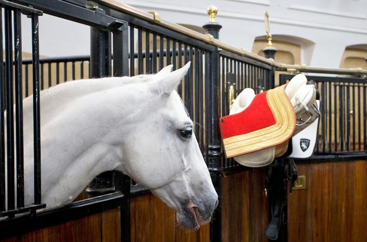 Vienna's Spanish Riding School