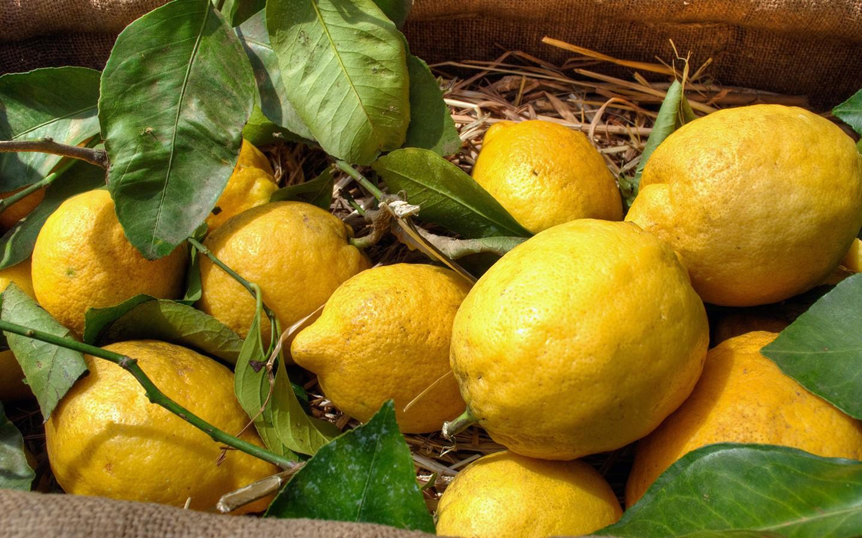 Giant lemons in Sorrento