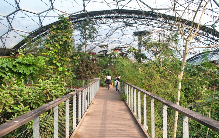 The canopy walkway in the rainforest biome
