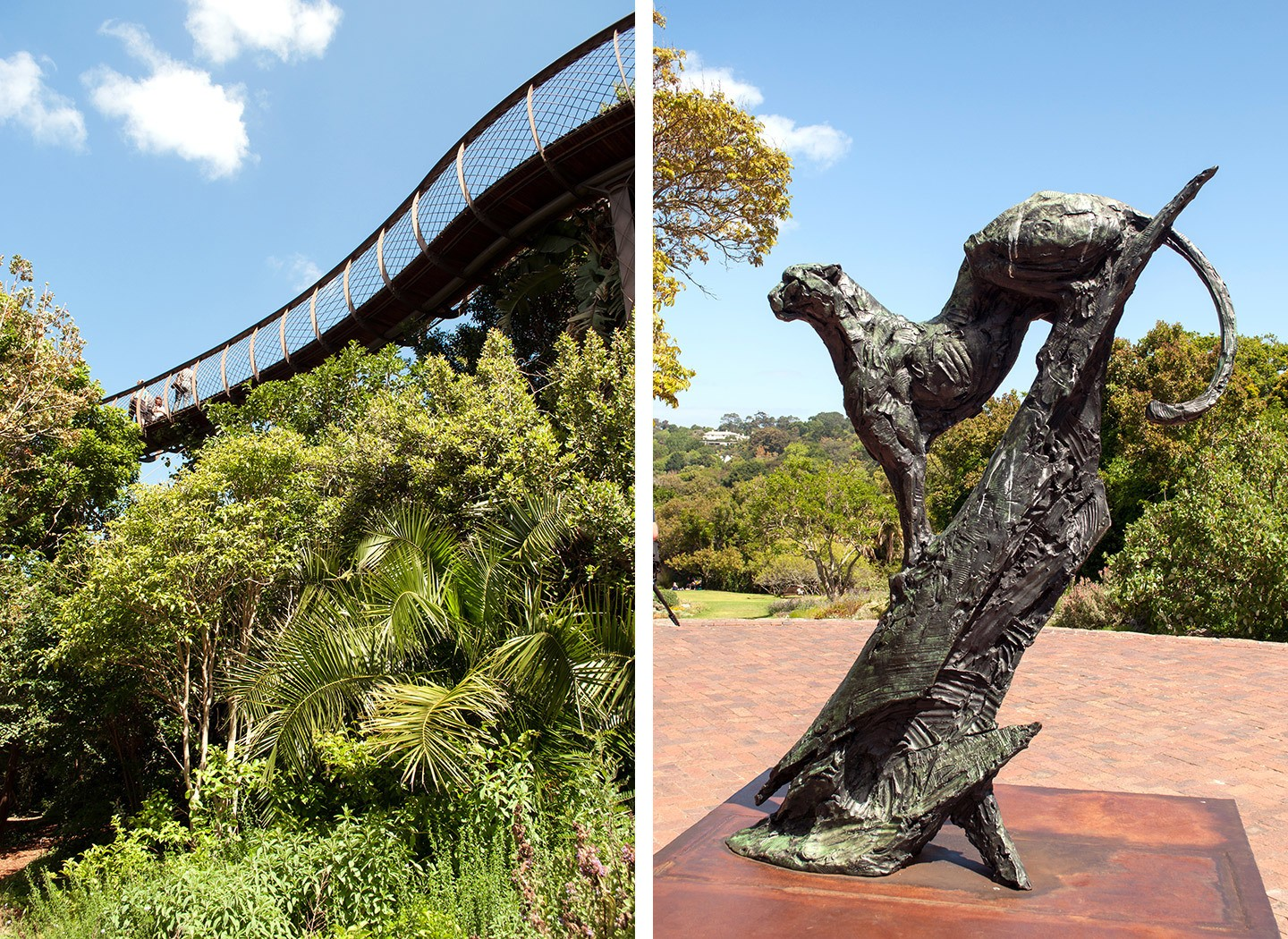 Kirstenbosch National Botanical Gardens in South Africa – tree walkway and leopard statue