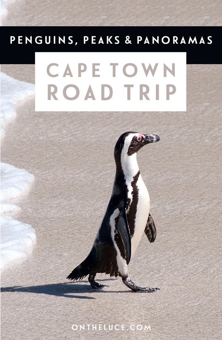 A one-day road trip route from Cape Town, with the Boulders Beach penguins, Muizenberg's colourful beach huts, Cape Point's views and Chapman's Peak Drive.