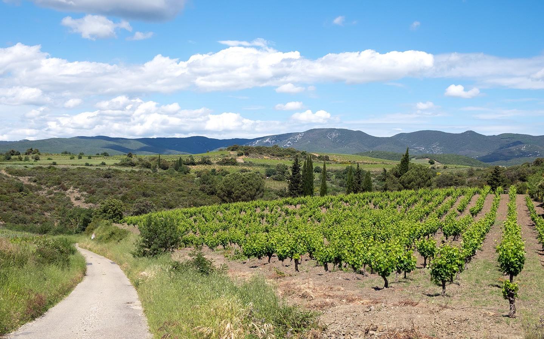 Spring in France's Languedoc wine region