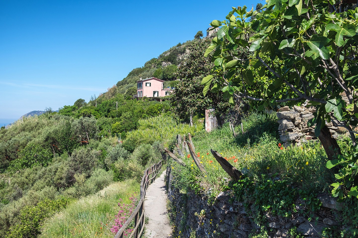 On the walking path to Vernazza in the Cinque Terre