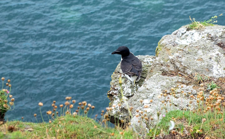 Seabirds in Northumberland, England