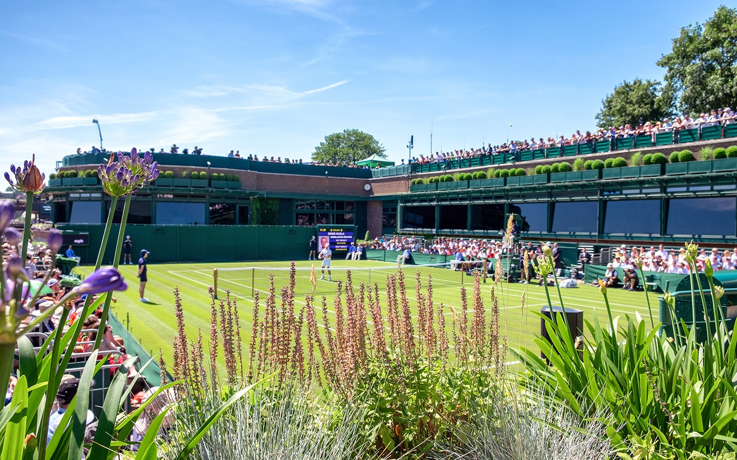 The flower-filled grounds at Wimbledon