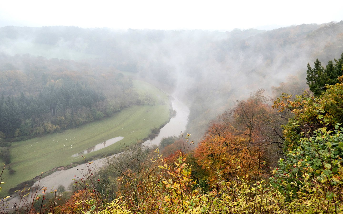 Symonds Yat Rock viewpoint in the Wye Valley
