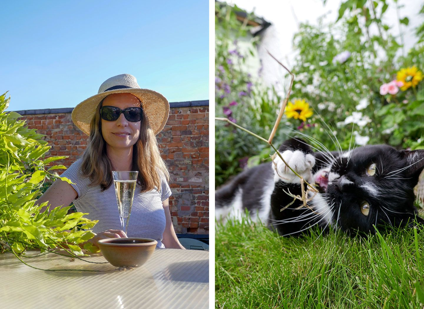 Lockdown life – shed roof proseccos and cats in the garden